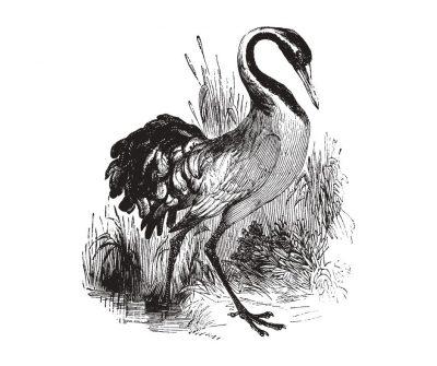 żuraw